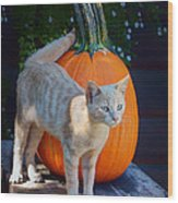 October Kitten #1 Wood Print