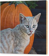 October Kitten #3 Wood Print
