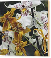 Gold And White Orchids Wood Print