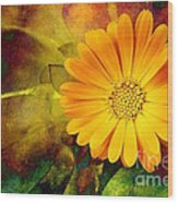 October Zinnia Wood Print