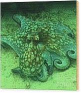 Octopus In The Sand Wood Print