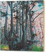 Octopus Tree  Wood Print
