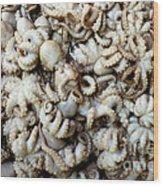 Octopuses Wood Print