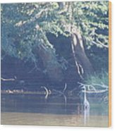 Ode The Great Blue Heron Wood Print by Debbie Nester