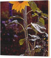 Ode To Sunflowers Wood Print