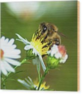 Of Bee And Flower Wood Print