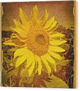 Of Sunflowers Past Wood Print