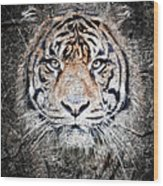 Of Tigers And Stone Wood Print