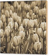 Of Tulips Past Wood Print