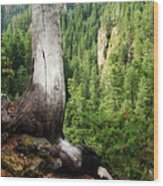 Off The Hiking Trail Wood Print
