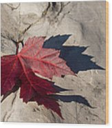 Oh Canada Maple Leaf Wood Print