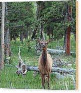 Oh Dear I See A Deer Wood Print