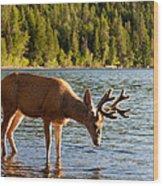 Oh Deer Is That Me Wood Print
