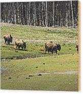 Oh Give Me A Home Where The Buffalo Roam Wood Print