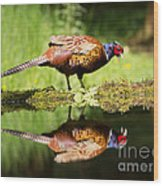 Oh My What A Handsome Pheasant Wood Print