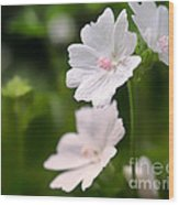 Oh So Pretty Musk Mallow Wood Print