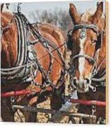 Ohio Draft Horses Wood Print