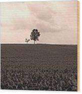 Ohio Fields  Wood Print