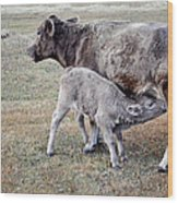 Oil Paint Look Cow And Calf Portrait Usa Wood Print