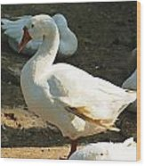 Oil Painting - A Duck Making A Pose Wood Print