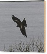 Oil Painting - A Large Bird Flying As Part Of The Birds Of Prey Show Wood Print