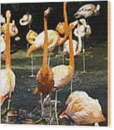 Oil Painting - A Number Of Flamingos With Their Heads Held High Inside The Jurong Bird Park Wood Print