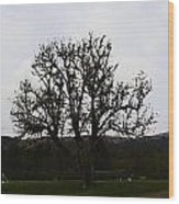 Oil Painting - An Old Tree In The Middle Of A Garden And Playground Wood Print