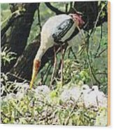 Oil Painting - Mama Stork Feeding Young Wood Print