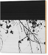 Oil Painting - Small Plant Branches Falling Over A Ledge - Horizontal Wood Print