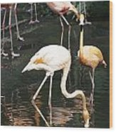 Oil Painting - The Head Of A Flamingo Under Water In The Jurong Bird Park In Singapore Wood Print