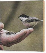 Oil Painting Black-capped Chickadee  Wood Print