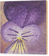 Oil Painting Of Pansy - Viola Tricolor Wood Print