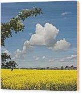 Oilseed Rape Field Against Blue Sky Wood Print
