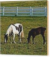Ok Horses Wood Print