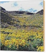Okanagan Valley Sunflowers 1 Wood Print