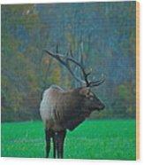 Okonoluftee Elk Wood Print