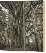 Old Banyan Tree Wood Print