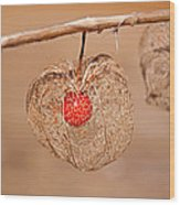 Old Chinese Lantern Pod Art Prints Wood Print