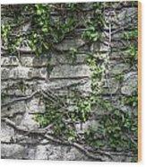 Old Coquina Wall Wood Print
