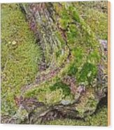 Old Decaying Lichens Moss Covered Taiga Tree Trunk Wood Print