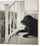 Old Dog On A Front Porch Wood Print