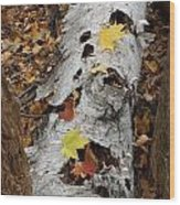 Old Fallen Birch Wood Print
