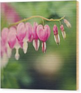 Old Fashioned Bleeding Hearts Wood Print