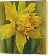 Old Fashioned Daffodil Wood Print
