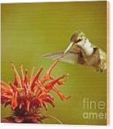 Old Fashioned Hummingbird Wood Print