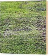 Old Green Grass Wood Print