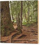 Old Growth Cedar At Cheakamus Lake Wood Print
