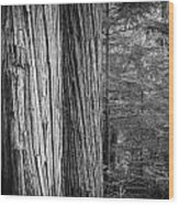 Old Growth Cedars Glacier National Park Bw Wood Print
