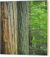 Old Growth Cedars Glacier National Park Wood Print