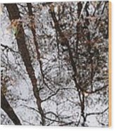Old Growth Cypress Reflection Wood Print